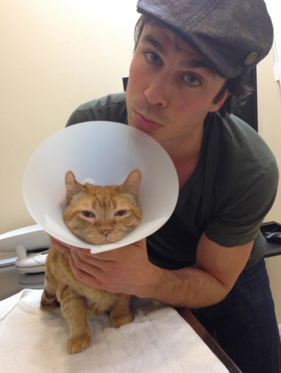 nina-dobrev-ian-somerhalder-cat-featured